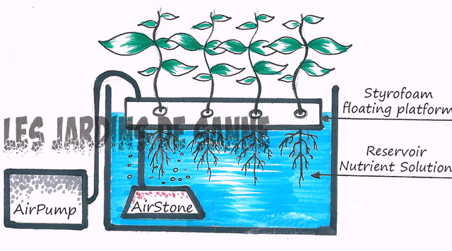 Deep Water Culture For Plants: Sådan Opbygger Et Deep Water Culture System